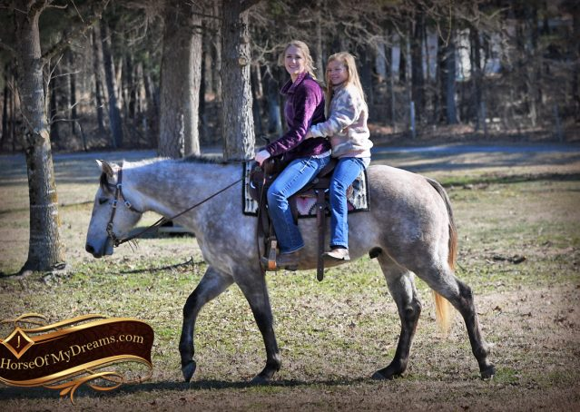 021-Sterling-Grey-AQHA-Quarter-Horse-trail-family-bombproof-for-sale