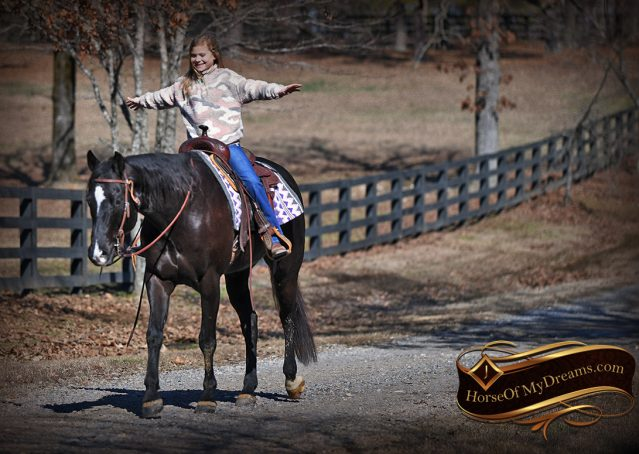 021-Tedd4-Black-AQHA-Gelding-For-Sale