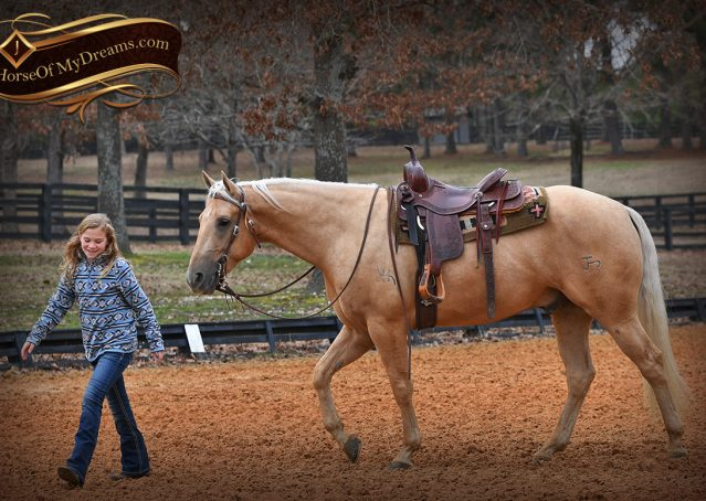 022-Odie-AQHA-Palomino-Gelding-For-Sale