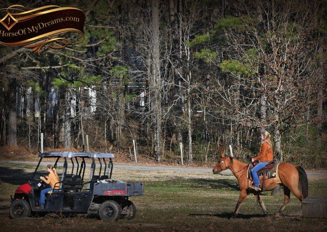 022-Phoenix-Buckskin-Dun-Quarter-Horse=Gelding-For-Sale