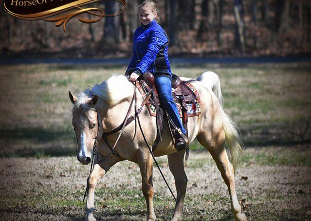 022-Shiner-Golden-Palomino-AQHA-NRHA-Reiner-Reining-Quarter-Horse-Gelding-For-Sale