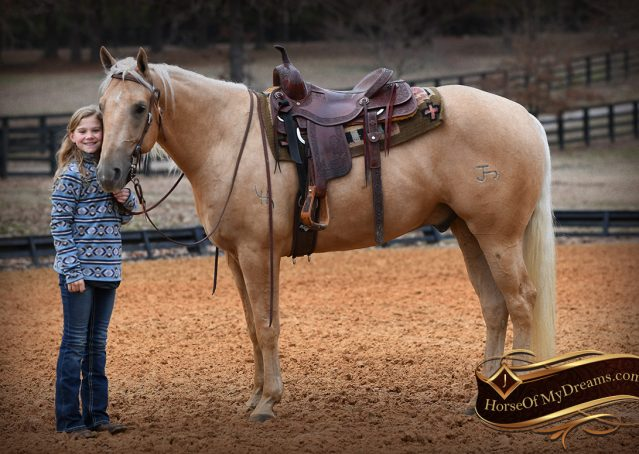 023-Odie-AQHA-Palomino-Gelding-For-Sale