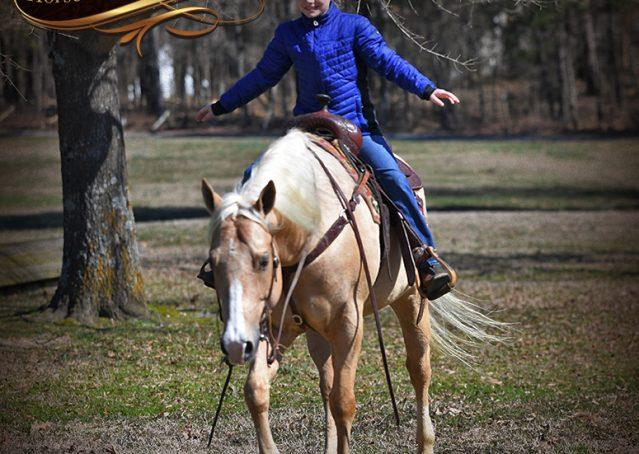 023-Shiner-Golden-Palomino-AQHA-NRHA-Reiner-Reining-Quarter-Horse-Gelding-For-Sale