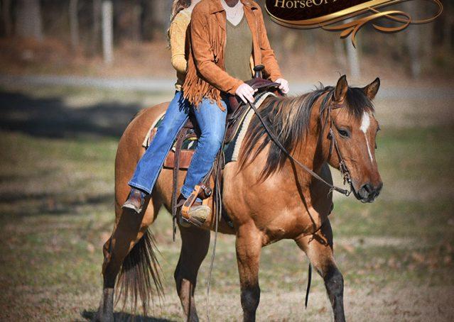 024-Phoenix-Buckskin-Dun-Quarter-Horse=Gelding-For-Sale