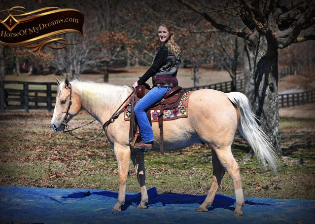 024-Shiner-Golden-Palomino-AQHA-NRHA-Reiner-Reining-Quarter-Horse-Gelding-For-Sale