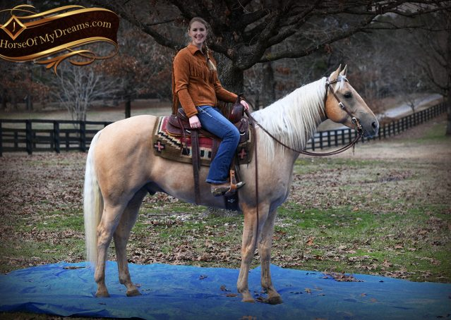 025-Odie-AQHA-Palomino-Gelding-For-Sale