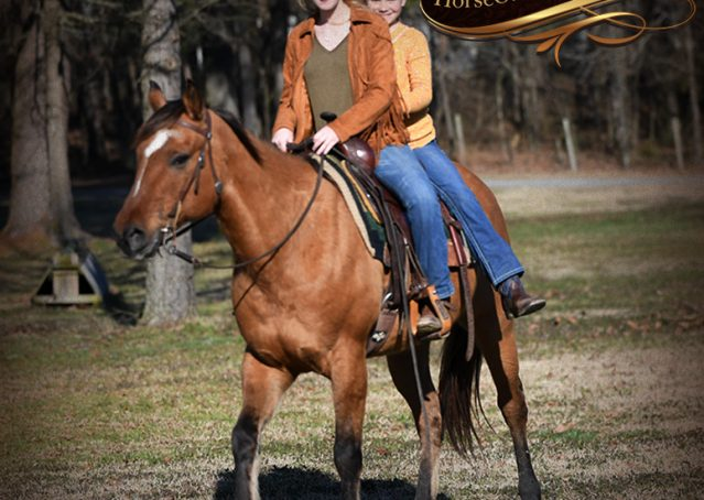 025-Phoenix-Buckskin-Dun-Quarter-Horse=Gelding-For-Sale