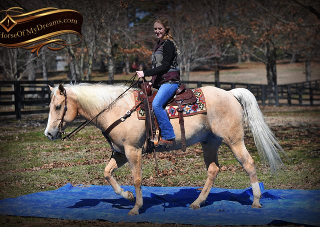 025-Shiner-Golden-Palomino-AQHA-NRHA-Reiner-Reining-Quarter-Horse-Gelding-For-Sale