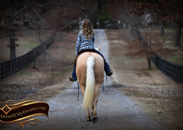 026-Odie-AQHA-Palomino-Gelding-For-Sale