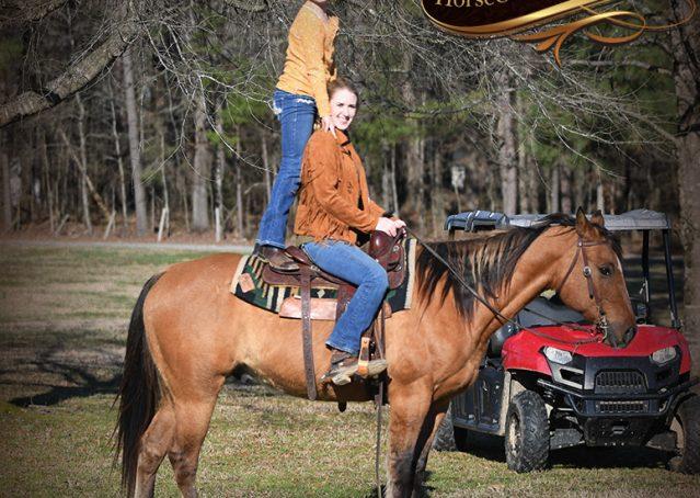 026-Phoenix-Buckskin-Dun-Quarter-Horse=Gelding-For-Sale
