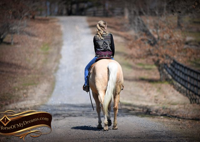 026-Shiner-Golden-Palomino-AQHA-NRHA-Reiner-Reining-Quarter-Horse-Gelding-For-Sale