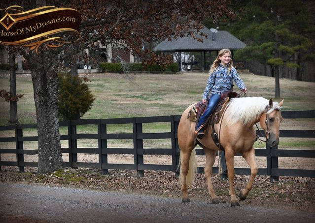 027-Odie-AQHA-Palomino-Gelding-For-Sale