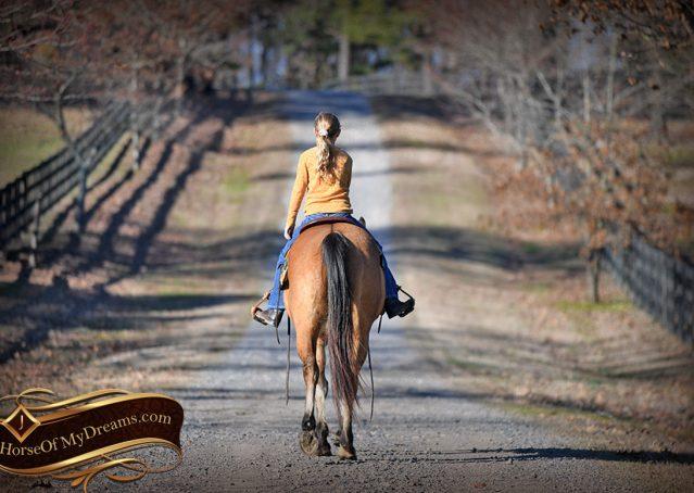 027-Phoenix-Buckskin-Dun-Quarter-Horse=Gelding-For-Sale