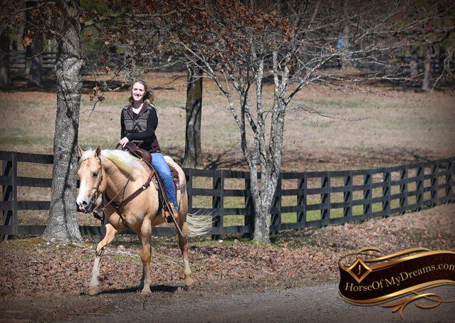027-Shiner-Golden-Palomino-AQHA-NRHA-Reiner-Reining-Quarter-Horse-Gelding-For-Sale