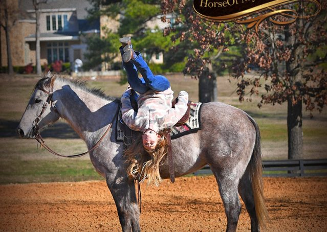 027-Sterling-Grey-AQHA-Quarter-Horse-trail-family-bombproof-for-sale