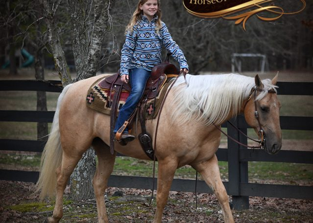 028-Odie-AQHA-Palomino-Gelding-For-Sale