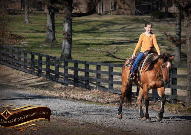 028-Phoenix-Buckskin-Dun-Quarter-Horse=Gelding-For-Sale