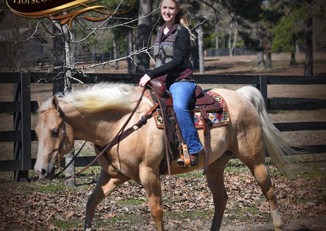 028-Shiner-Golden-Palomino-AQHA-NRHA-Reiner-Reining-Quarter-Horse-Gelding-For-Sale