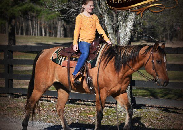 029-Phoenix-Buckskin-Dun-Quarter-Horse=Gelding-For-Sale
