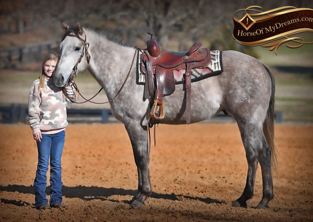 029-Sterling-Grey-AQHA-Quarter-Horse-trail-family-bombproof-for-sale