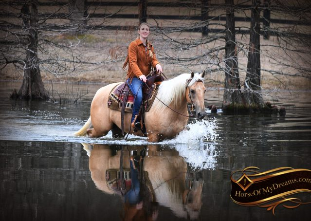 030-Odie-AQHA-Palomino-Gelding-For-Sale