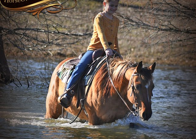 030-Phoenix-Buckskin-Dun-Quarter-Horse=Gelding-For-Sale