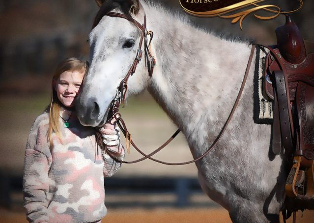 030-Sterling-Grey-AQHA-Quarter-Horse-trail-family-bombproof-for-sale