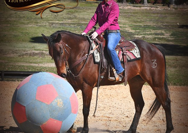 031-Cash-Bay-AQHA-gelding-for-sale