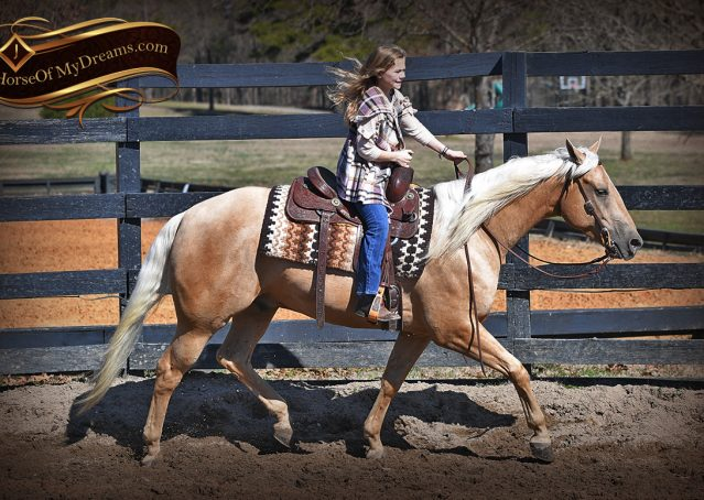 031-Odie-AQHA-Palomino-Gelding-For-Sale