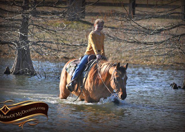 031-Phoenix-Buckskin-Dun-Quarter-Horse=Gelding-For-Sale