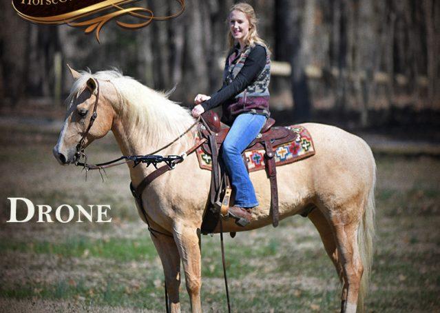031-Shiner-Golden-Palomino-AQHA-NRHA-Reiner-Reining-Quarter-Horse-Gelding-For-Sale