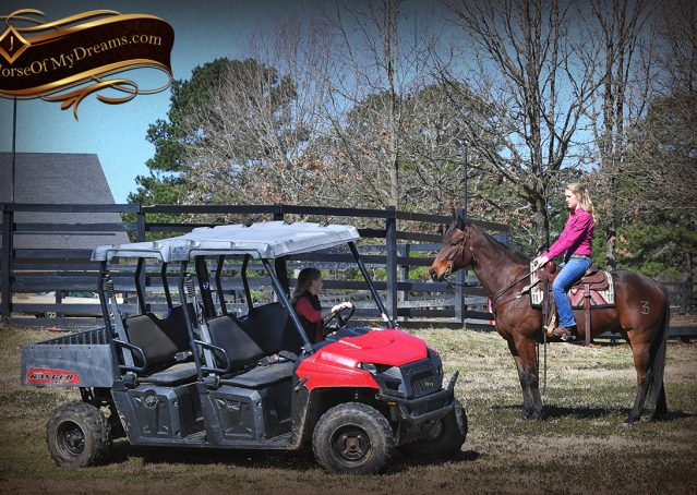 032-Cash-Bay-AQHA-gelding-for-sale