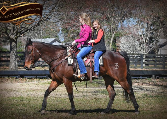 033-Cash-Bay-AQHA-gelding-for-sale