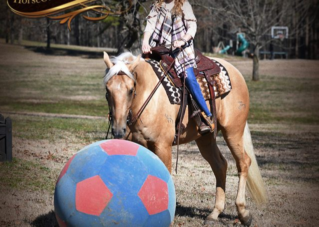 033-Odie-AQHA-Palomino-Gelding-For-Sale