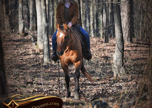 033-Phoenix-Buckskin-Dun-Quarter-Horse=Gelding-For-Sale