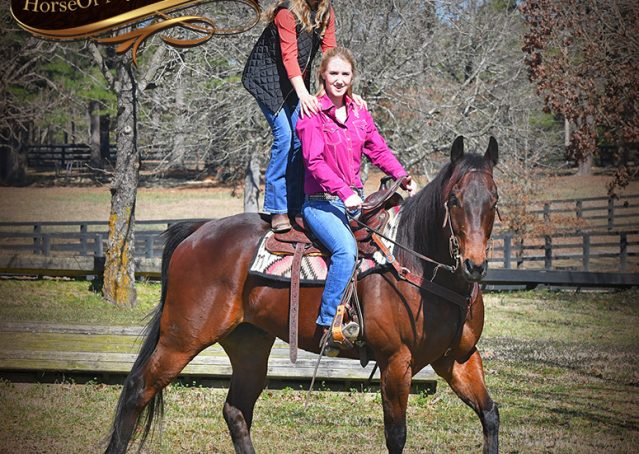 034-Cash-Bay-AQHA-gelding-for-sale