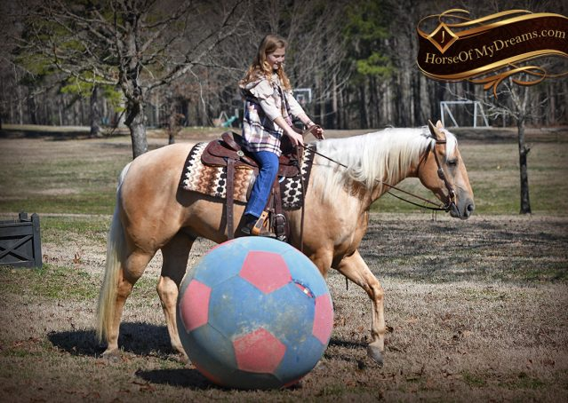 034-Odie-AQHA-Palomino-Gelding-For-Sale