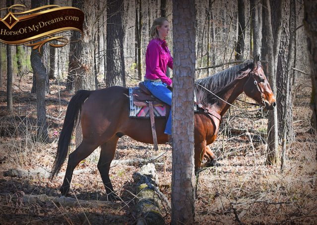 035-Cash-Bay-AQHA-gelding-for-sale