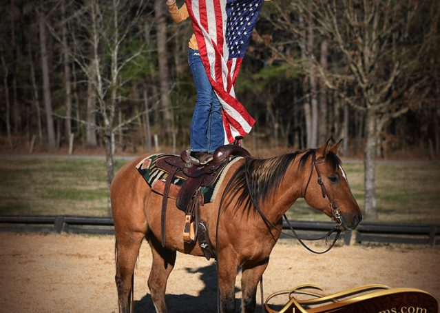 035-Phoenix-Buckskin-Dun-Quarter-Horse=Gelding-For-Sale