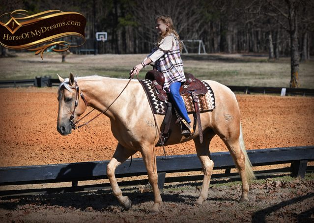 036-Odie-AQHA-Palomino-Gelding-For-Sale