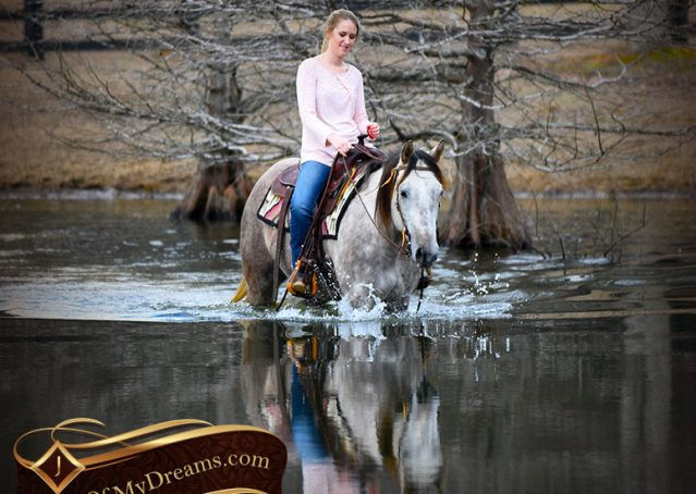 036-Sterling-Grey-AQHA-Quarter-Horse-trail-family-bombproof-for-sale