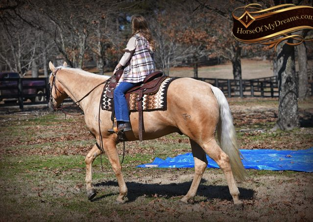 037-Odie-AQHA-Palomino-Gelding-For-Sale