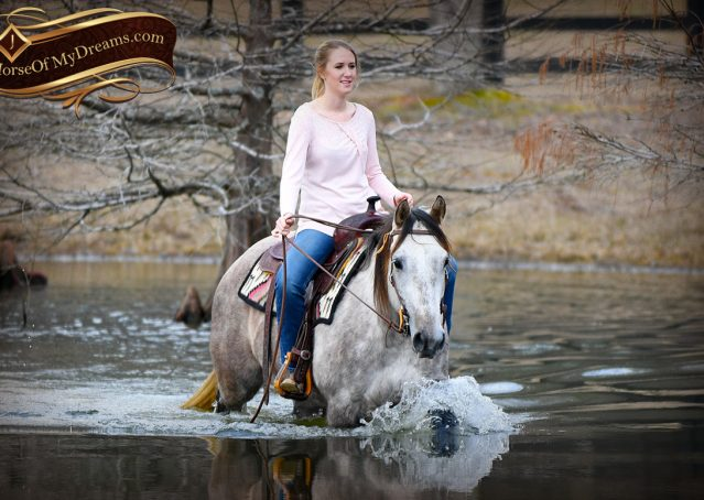 037-Sterling-Grey-AQHA-Quarter-Horse-trail-family-bombproof-for-sale