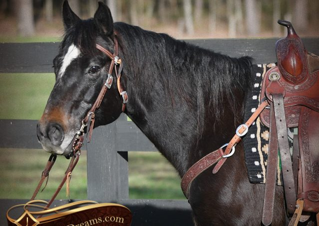 001-Joe2-Black-AQHA-Gelding-For-Sale