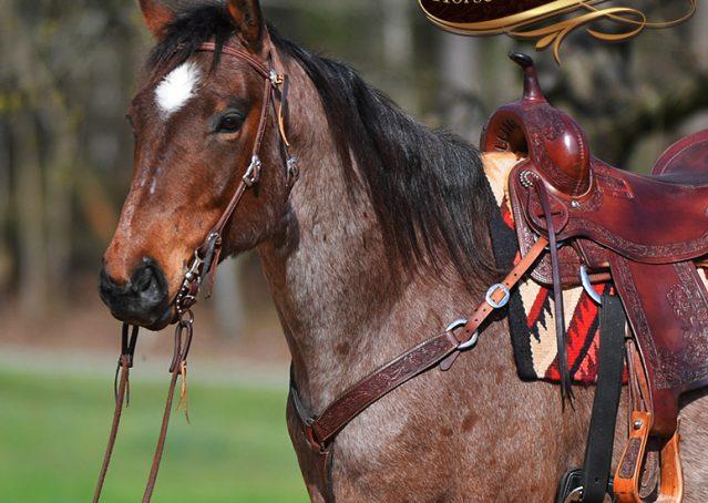 001-Levi-Bay-Roan-Quarter-Horse-For-Sale