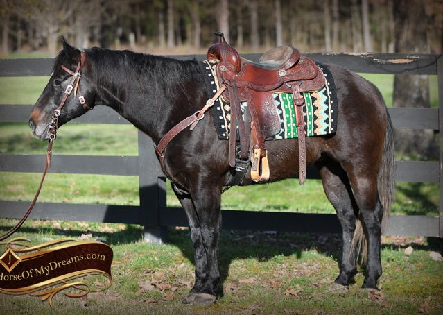 002-Joe2-Black-AQHA-Gelding-For-Sale