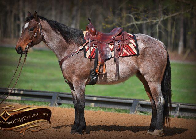 002-Levi-Bay-Roan-Quarter-Horse-For-Sale