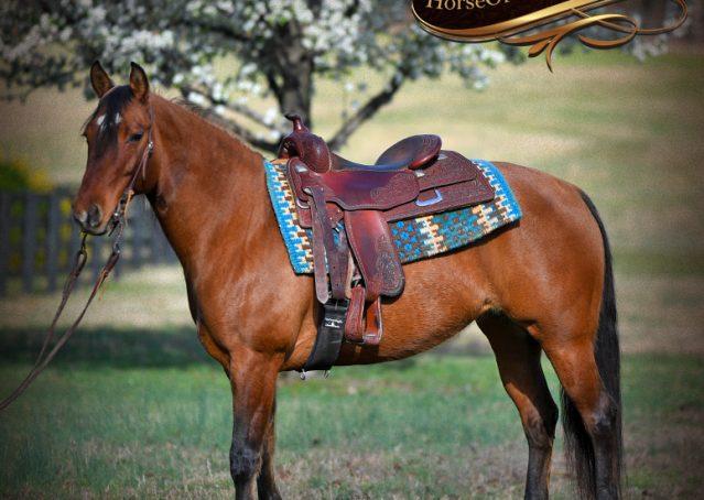 002-Savant-AQHA-Buckskin-Dun-Mare-Reining-Reiner-For-Sale