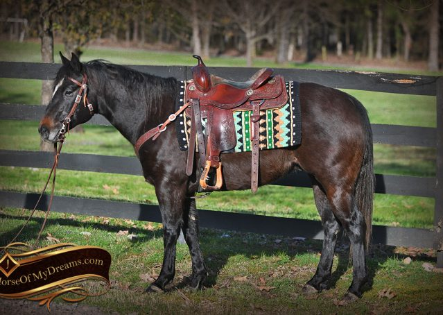 003-Joe2-Black-AQHA-Gelding-For-Sale