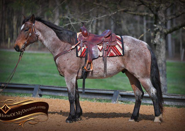 003-Levi-Bay-Roan-Quarter-Horse-For-Sale